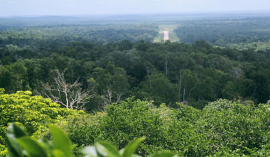 View from one of the Temples of the jungle and the airstrip at Tikal